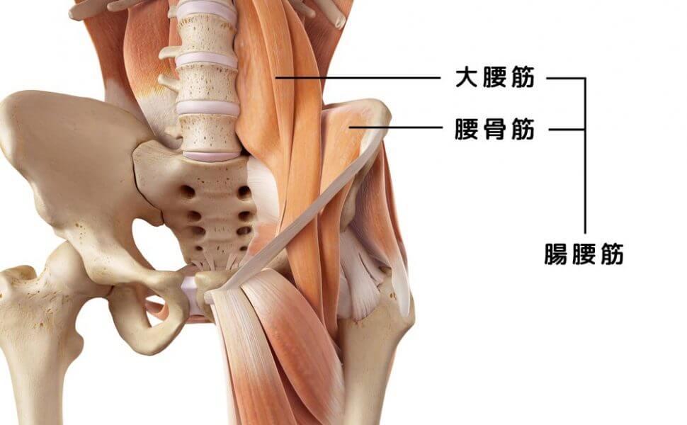 久留米の整体大腿直筋腸腰筋