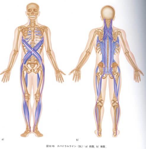 久留米市で筋膜治療整体ならエーパシへ