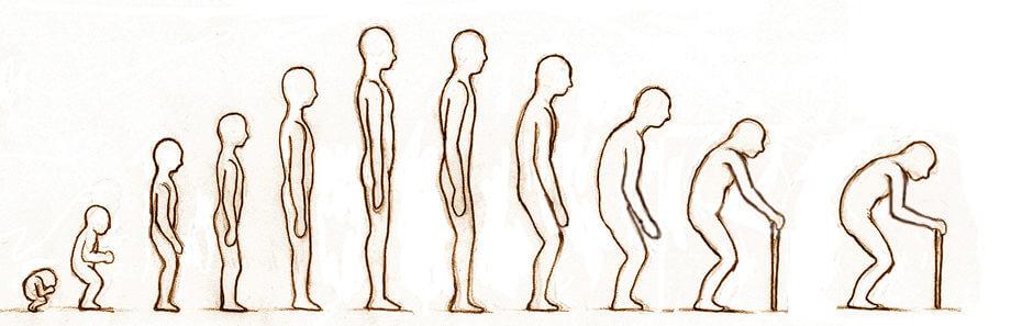老化による姿勢の変化